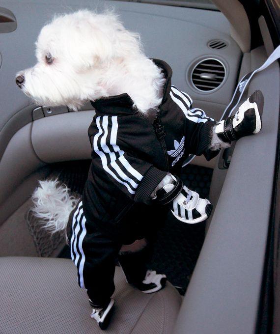 adidas dog clothes uk