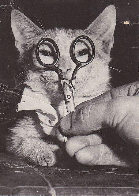 藤田嗣治ナイズドな猫 | Flickr - Photo Sharing!