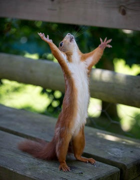 Hallelujah!  #squirrel #animal #photograph Squirrels really are the happy and joyfull!