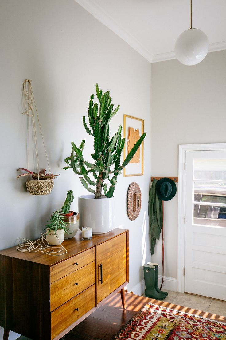 To say that plants are having a moment might be the understatement of the year — or maybe the last four or five years, to be exact. Everywhere one looks (well,