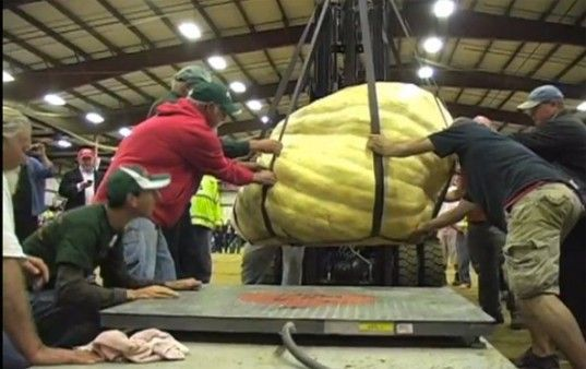 World's First One Ton Pumpkin Squashes the Competition at the Topsfield Fair!