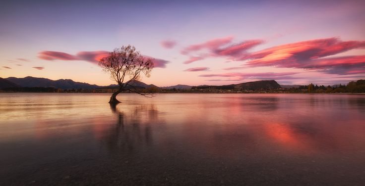 Bird Tree. - Lake Wanaka, New Zealand.  Darren J.
