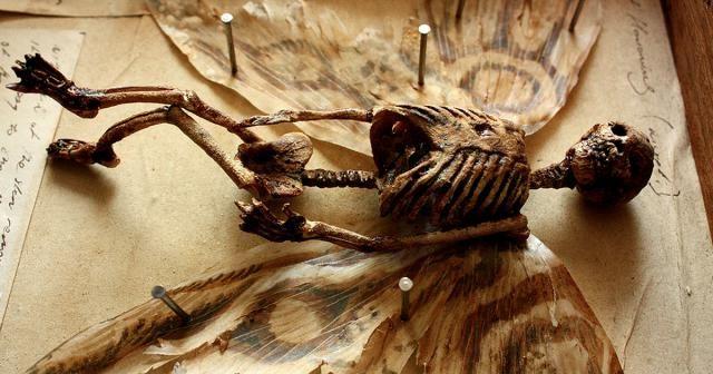 Η ΑΠΟΚΑΛΥΨΗ ΤΟΥ ΕΝΑΤΟΥ ΚΥΜΑΤΟΣ: Αλλόκοτοι Σκελετοί Ανακαλύφθηκαν Στο Υπόγειο Ενός ...