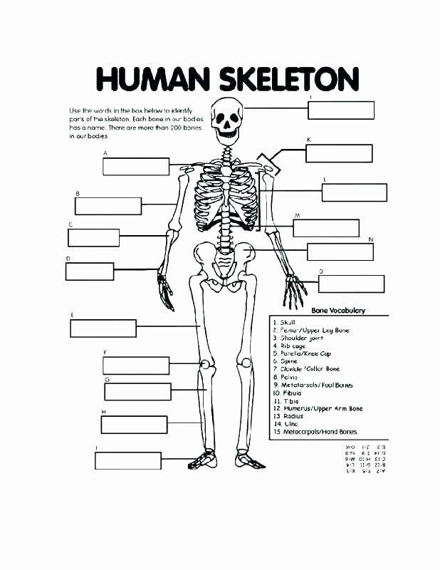 Printable Horse Anatomy Worksheets Free Printable Human ...