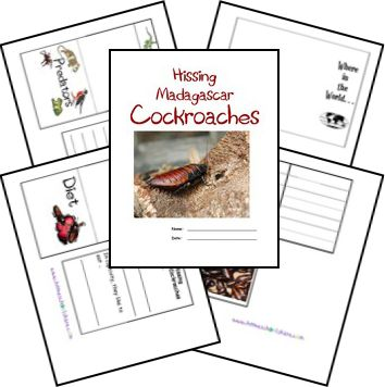 Good for our new class pets.  FREE Madagascar Hissing Cockroach Lapbook
