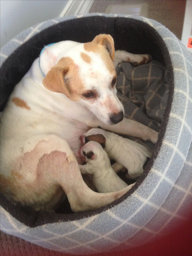 Georgie and her 2 puppies, born 07-06-16, sadly 3 didn't make it.