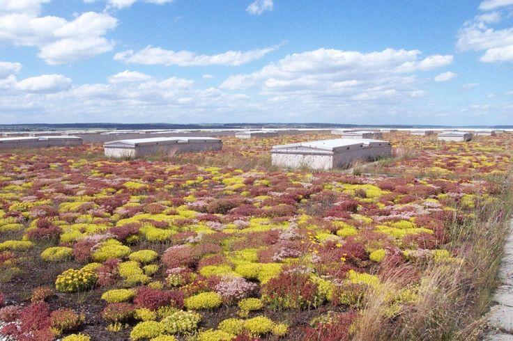Příklad realizace zelené střechy č. 9