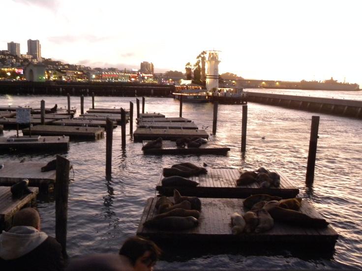 Pier39 #seals #SanFrancisco #sunset #Nikon P90