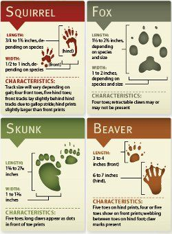 Animal Tracks printable cards via Scoutmaster Musings at boyscouttrail.com