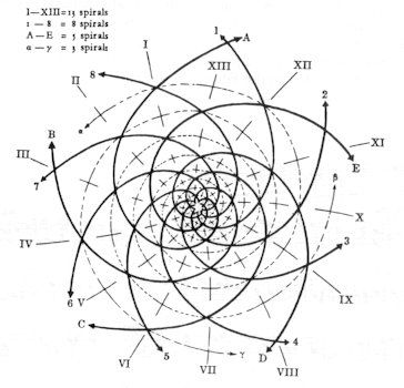 17 best images about fibonacci sequence on pinterest for Sacred art tattoo corvallis