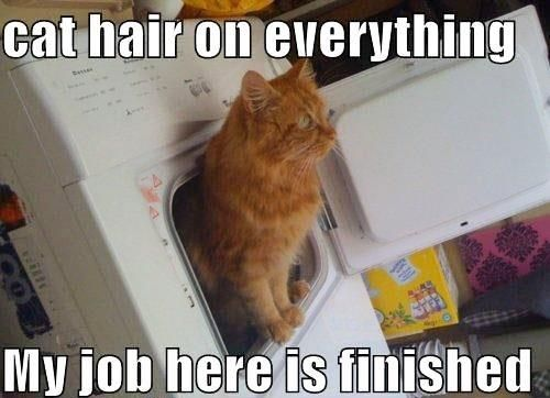 Damn Cat Hair   Click for more Funny Pictures --> http://www.funnypicshub.com