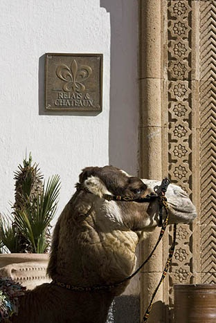L'Heure Bleue Palais. Hotel and restaurant on the seafront. Essaouira, Morocco.    #relaischateaux #morocco #camel