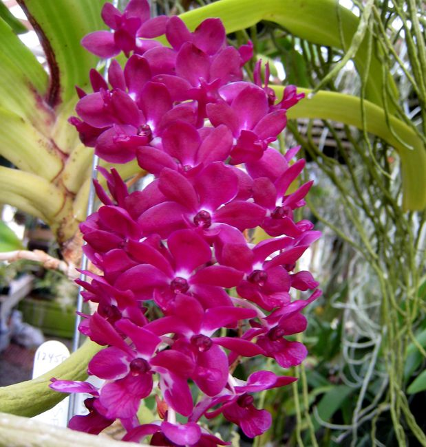 how to grow orchids at home in india