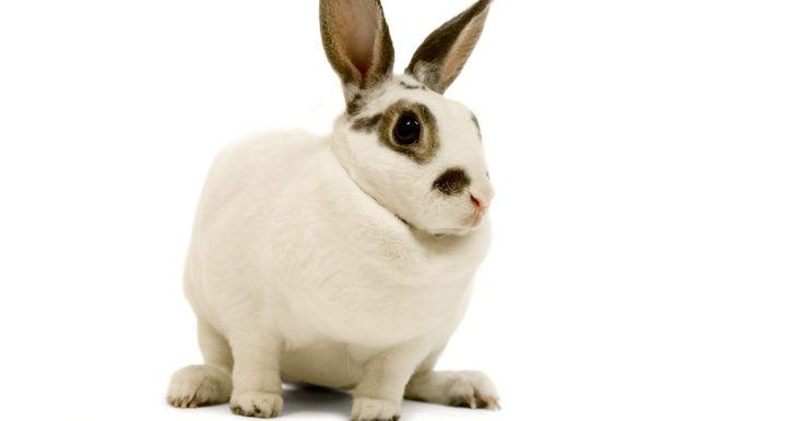 Forrações para a gaiola de um coelho. Os coelhos são animais divertidos e gratificantes. Uma das considerações mais importantes para a saúde do seu coelho é o que deve ser usado para forrar uma gaiola. Os coelhos a usarão para dormir, nidificar e depositar resíduos, então escolher a forração certa garantirá que o ambiente do seu coelho esteja limpo e saudável.
