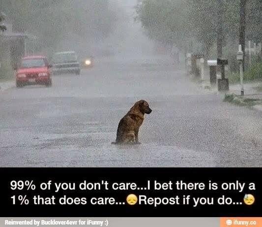 I would take that dog home❤️❤️.