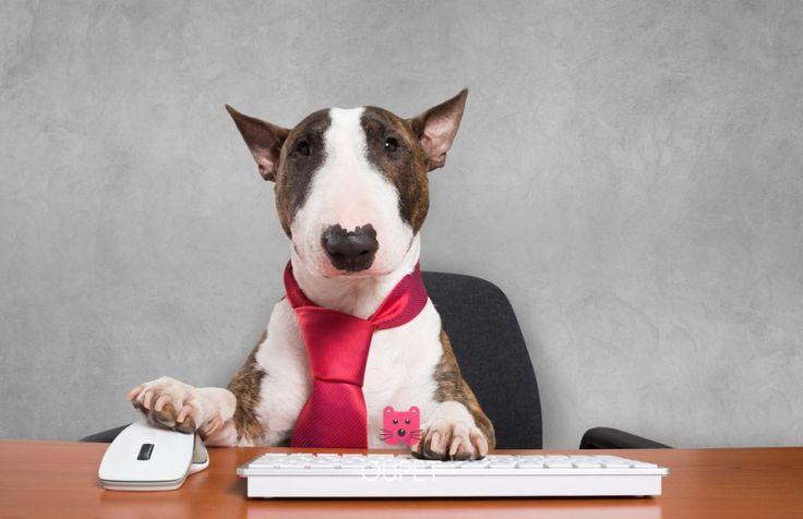 #Työskentelevätkoirat, Miten koirat voivatkaan olla niin uskomattomia? Upea lemmikkinä sekä todellakin ihmisen paras ystävä. ❤️ Koirat voivat myös työskennellä työrooleissa, joihin me ihmiset emme kykene.    Dogs are way too amazing! Amazing pet and best friend to human. And they can also work in ways that human cannot <3