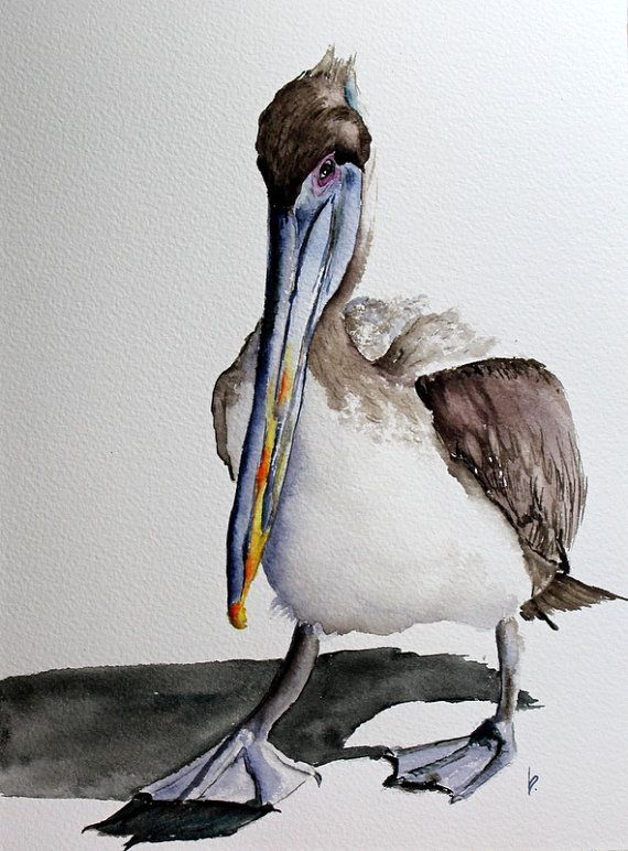 original watercolor painting bird art Brown Pelican by bMoorearts