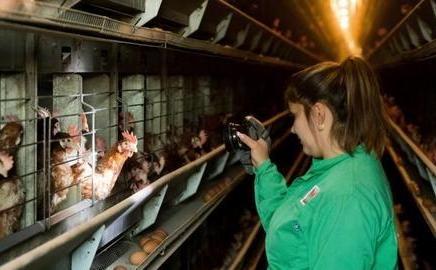 ΣΟΥΗΔΙΑ: Εστία της γρίπης των πτηνών εντοπίστηκε σε αγρόκτημα στα νότια της χώρας