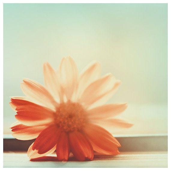 Coral Mint Fine Art Photography Minimalist Nature By AylilAntoniu, $14.00