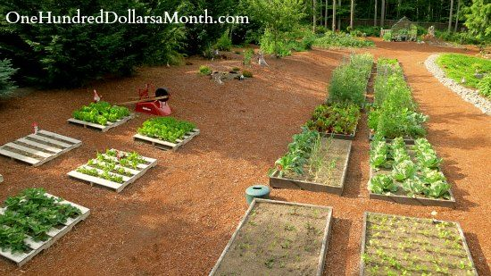 Backyard Garden Beds : mavis garden blog raised garden beds  AVELINE!  Pinterest