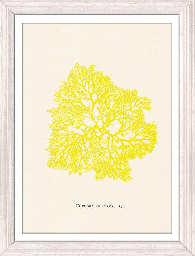 Yellow sea kelp no.05-Neon color series - sea life print