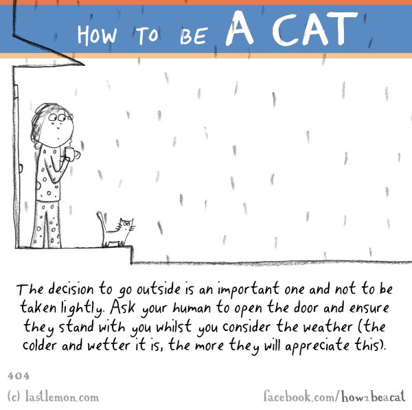 Cats: HOW TO BE A CAT: The decision to go outside is an important one and not to be taken lightly. Ask your human to open the door and ensure they stand with you whilst you consider the weather (the colder and wetter it is, the more they will appreciate this).