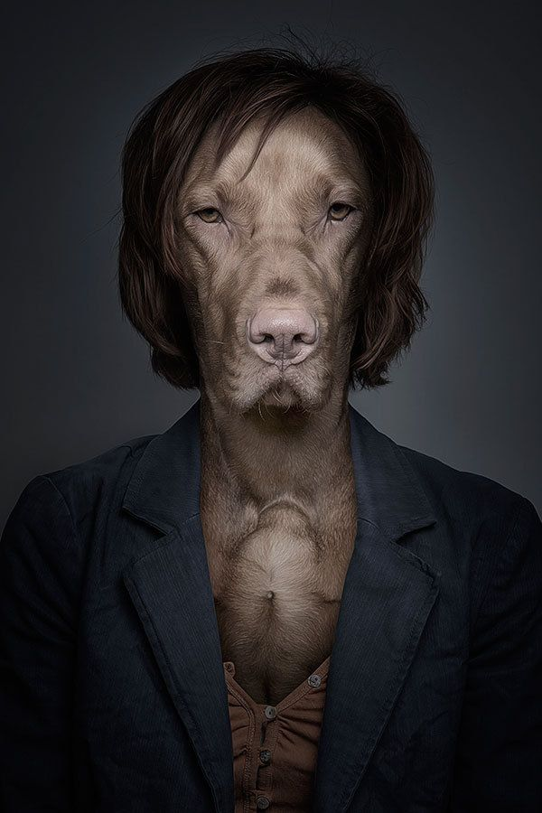 Funny Portraits of Dogs Dressed Like Humans - My Modern Metropolis