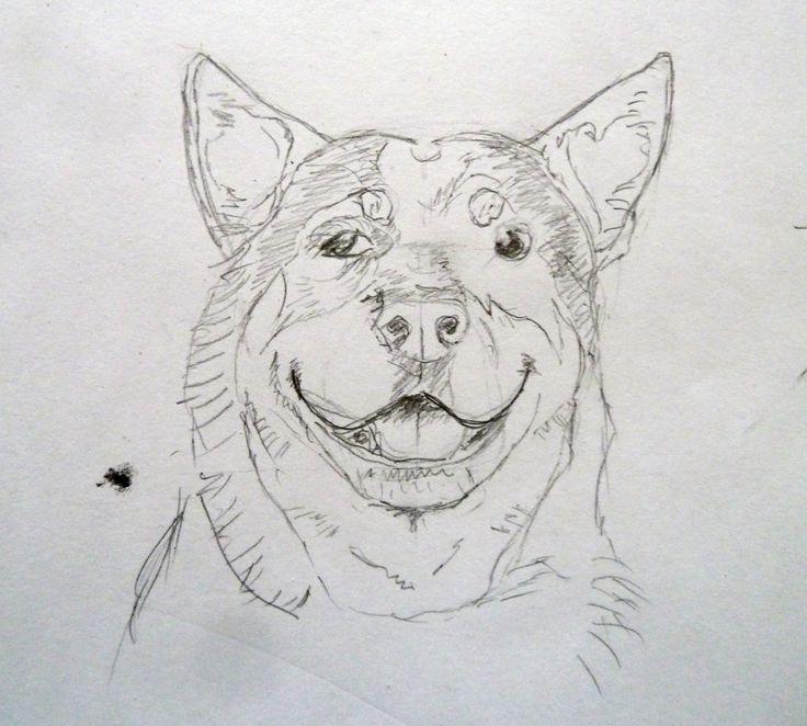 ACD, Australian cattle dog, sketch, graphic pencil, Cretacolor, sketching, Gordi the heeeler, Gordon