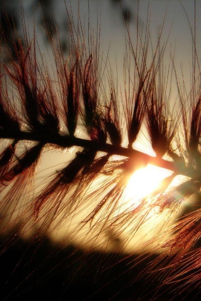 Sunrays through the grain
