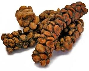 The famous Kopi Luwak coffee beans from Indonesia, collected from the droppings of the civet cat. The most expensive coffee in the world...