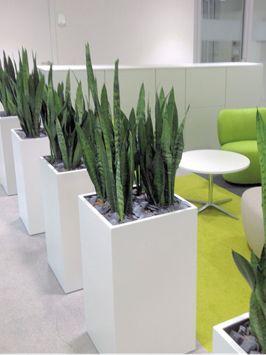 Moderne Grünpflanzen 8 besten raumbegrünung beispiele bilder auf