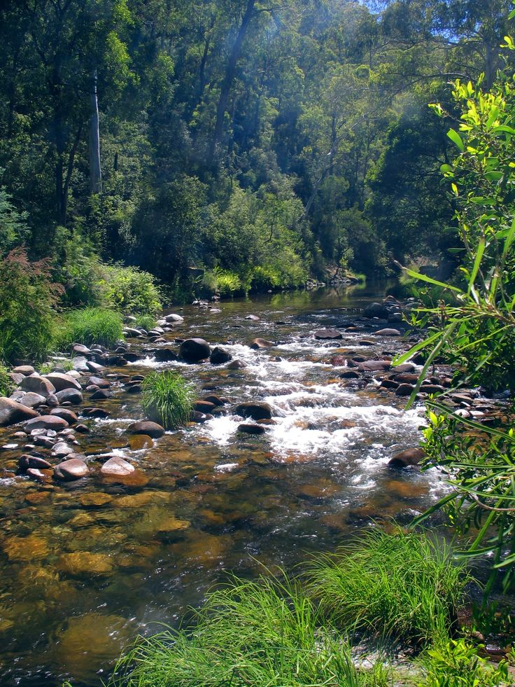 Howqua River, Victoria, Australia. Camping, walking, hiking, fishing
