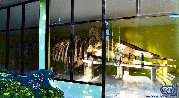 Ikan Paus Sperma, Physeter macrocephalus, ordo Cetacea dan merupakan salah satu jenis paus bergigi. Ikan paus Sperma memiliki volume otak yang paling besar dari ikan paus yang ada. Nama Sperma diambil dari zat lilin berwarna putih mirip dengan sperma yang terdapat dibagian kepalanya. Terdapat tiga jenis Ikan Paus Sperma yaitu ikan Paus Sperma Physeter, ikan Paus Sperma Pygmy dan ikan Paus Sperma Cebol.