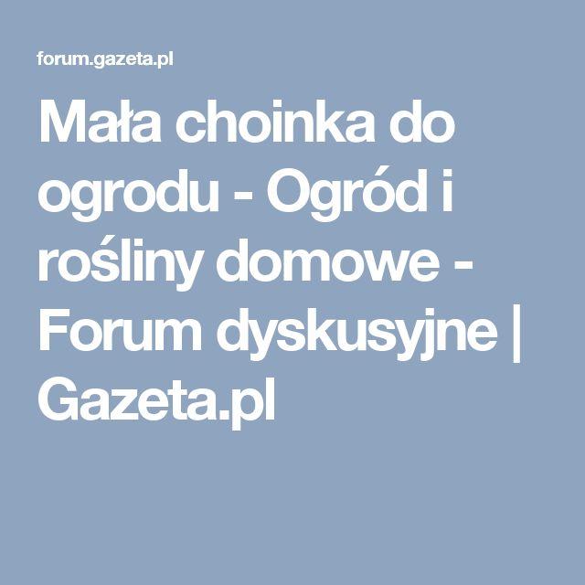 Mała choinka do ogrodu - Ogród i rośliny domowe - Forum dyskusyjne | Gazeta.pl