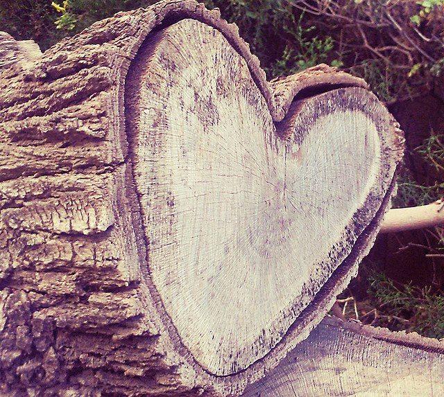 Tee heart, natural heart shape, love nature, love life! #love