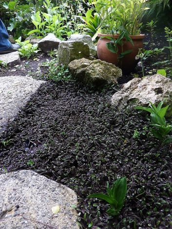 18 Best Images About Ground Cover Ideas On Pinterest