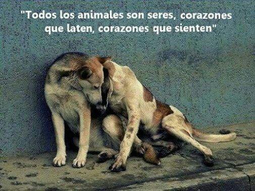 """""""Corazones que sienten..."""" #EstrechaSuPata #NoAlMaltratoAnimal"""