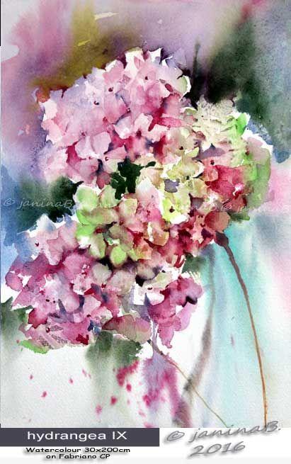 hydrangea IX / Watercolour 30x20cm  on Fabriano CP © janinaB. 2016