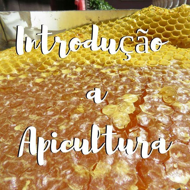 Vamos aprender apicultura, curso de introdução a apicultura Esta é uma excelente altura para aprender apicultura. comece agora. siga o link na bio #apicosta #apicultura #introduçãoaapicultura #abelhas  #Regram via @apicosta
