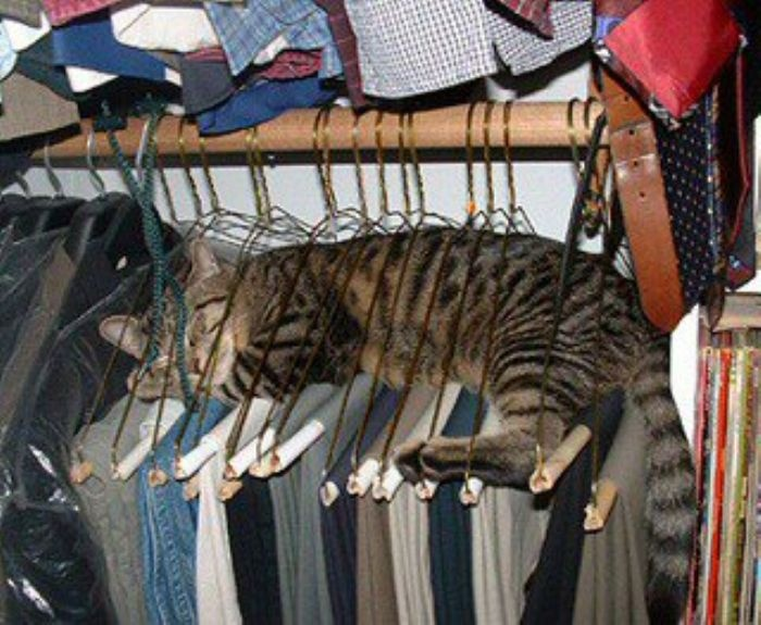 Cats... you gotta love 'em: Like A Boss, Cat Beds, Funny Cat, Cat Sleep, Cat Naps, Strange Places, Clothing Hangers, Silly Cat, Animal