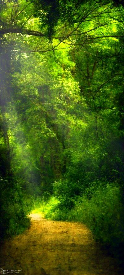 mystic forest path...
