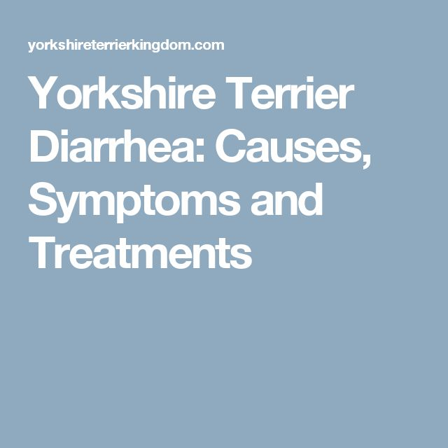 1000+ ideas about Yorkshire Terriers on Pinterest ...