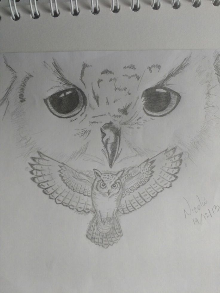It's been a while... #Drawings #Sketch #Nature #wild #Owl