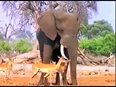 Africa Wildlife Documental