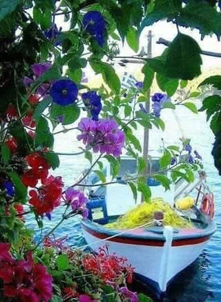 #greekislands #sifnos #kavosstudios #summer #greece #spring #flower #sea