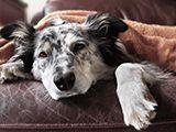 Les maladies et symptômes du chien