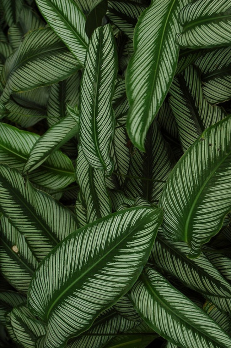 Tropical print background tumblr tropical patterns related keywords - Tropical Leaves Tumblr Related Keywords Amp Suggestions