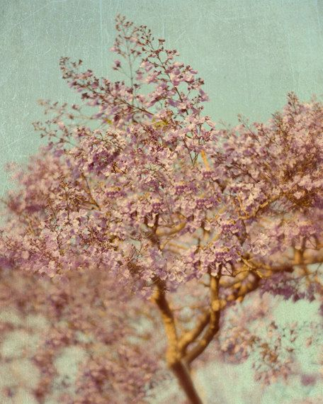 Flowering Tree Photography, Flower Photograph, 11x14 Photo, Pink and Blue Picture, Purple and Grey Art, Bedroom Wall Decor
