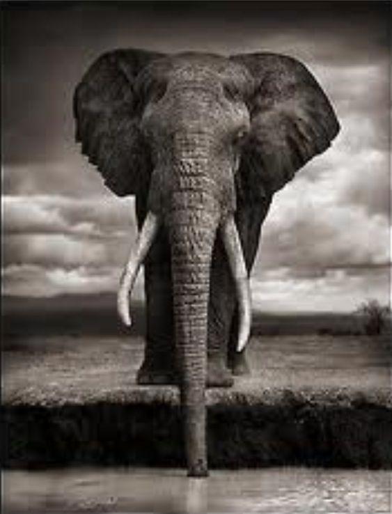 Realistic elephant idea