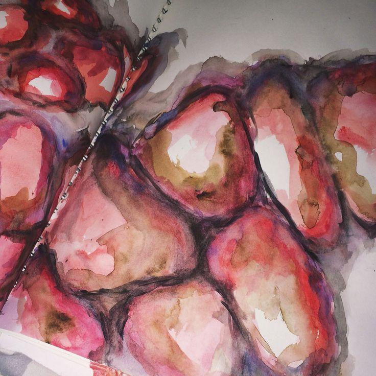 Pomegranate watercolour Ellisha Willis DHSFG